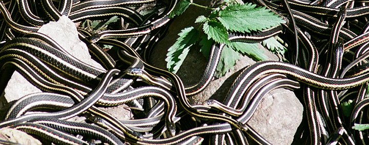 [VIDEO] Beware of SEO Snakes