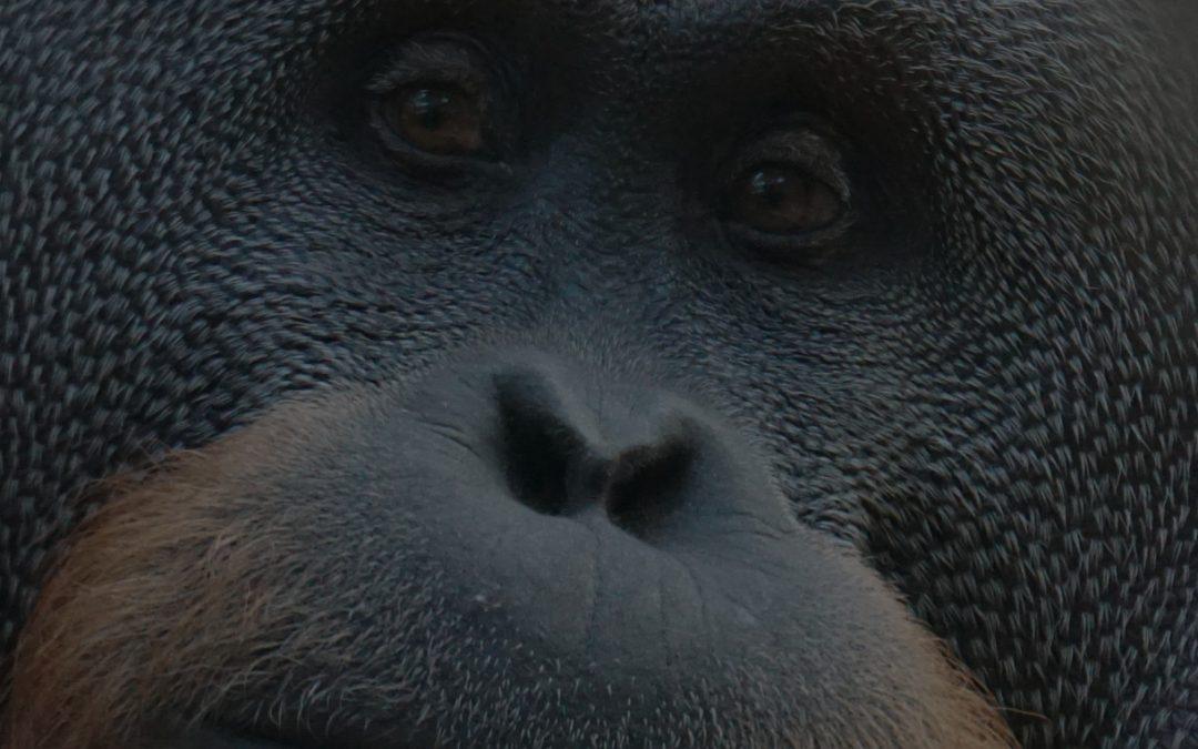 800 lb. Gorilla Gaps Between Programmers and Tech Writers