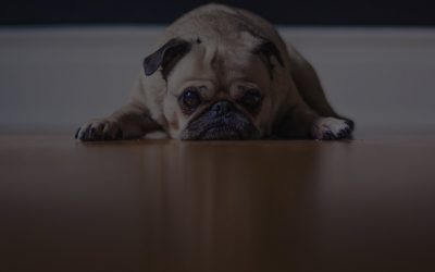 Top 3 Reasons Your API Documentation is Dastardly Dog Awful